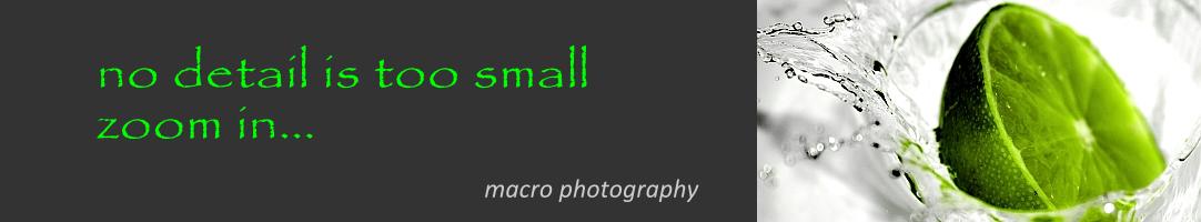 Macro Photographers
